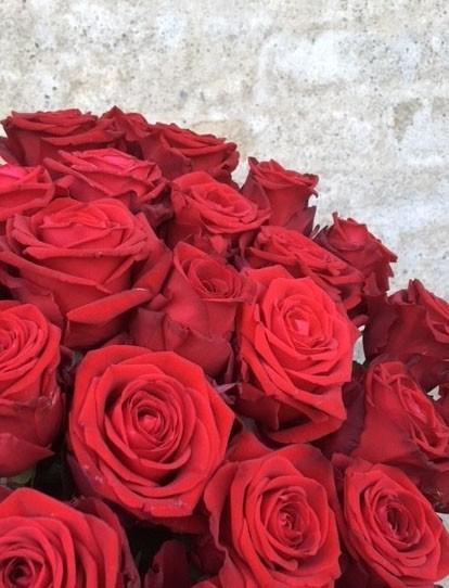 Røde roser